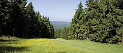 Alpine Pasture, Harz Mountain, Harz National Park, Spruce Tree, Hahnenklee, Tree