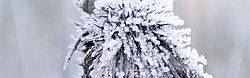 Plant Cold Winter Frost Ice Old