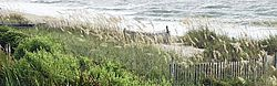 beach, grass, gray, green, plants, sea, waves, white